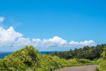 Epic forest landscape scenery from the walking trail of Haleakala National Park