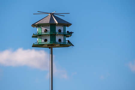 A nestling birds on top of a man-made housing in Rockport, Texas