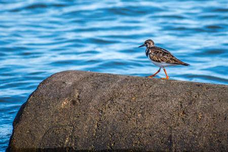 A small wading birds enjoying the view around the coastline of the seashore Imagens