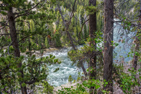 The famous and beautiful Yellowstone River in Wyoming 스톡 콘텐츠