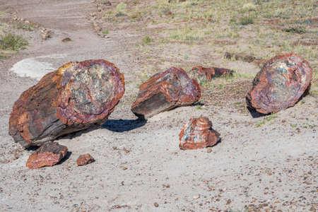 Petrified log in Petrified Forest National Park, Arizona