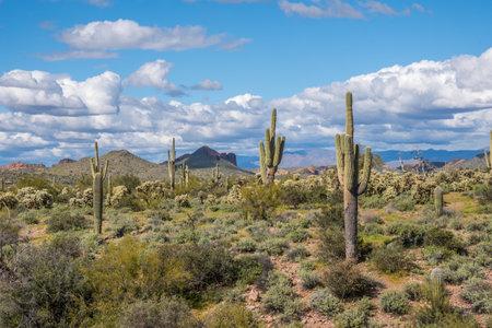 An overlooking view of nature in Lost Dutchman SP, Arizona