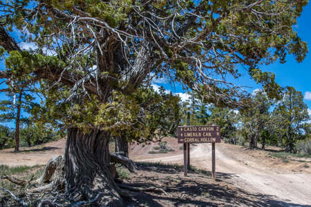 Dixie National Forest, UT, USA - May 24, 2020: The different kinds of trials going to its scenic destination