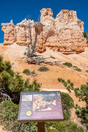 Bryce Canyon NP, UT, USA - May 25, 2020: Hike the Hoodoos Navajo Lopp