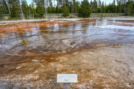 Yellowstone NP, WY, USA - August 7, 2020: The Bacteria Mat