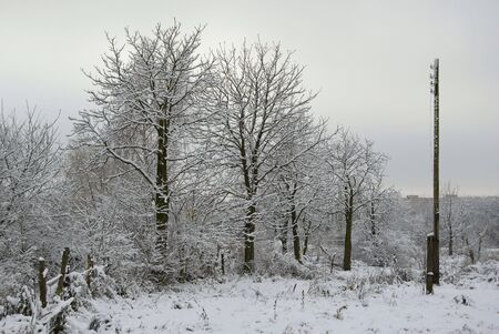 Trees are covered with a snow, a gloomy sad picture Stock Photo - 2384177