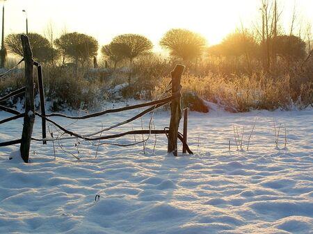 snowbound: Fence from a wire in a snowbound field