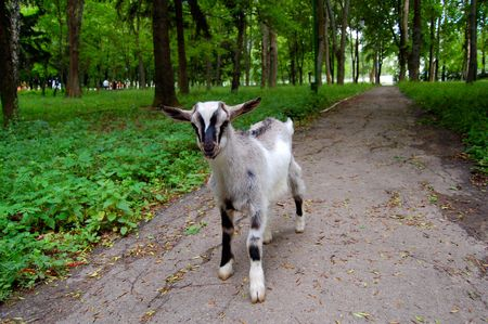 yeanling: The small grey kid walks in park Stock Photo