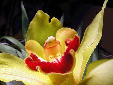 diminutive: The increased flower of an orchid is similar to the alien Stock Photo