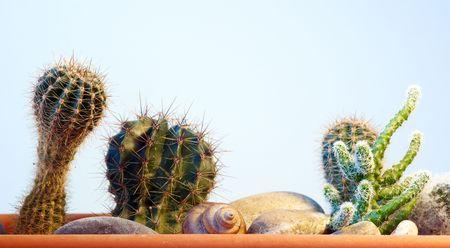 Diferentes cactus entre piedras en un fondo blanco Foto de archivo