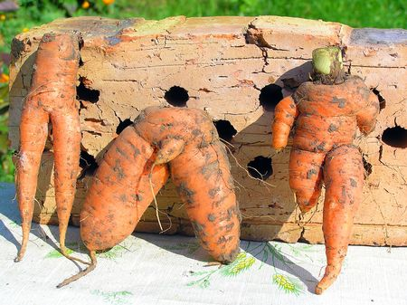 travesty: Different ridiculous figures of people from carrots