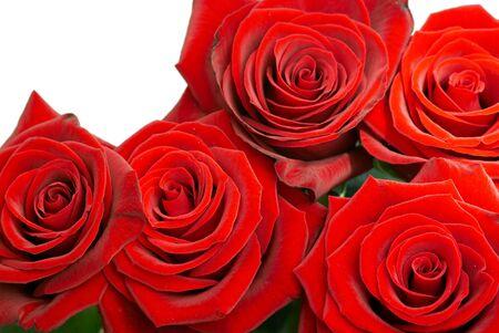 Brillantes rosas rojas sobre fondo blanco  Foto de archivo