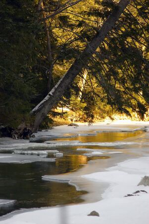 pine-tree leaned over the frozen brook Stock Photo - 3276301