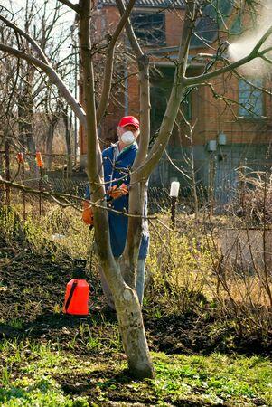 El hombre el jardinero �rboles procesos qu�micos Foto de archivo