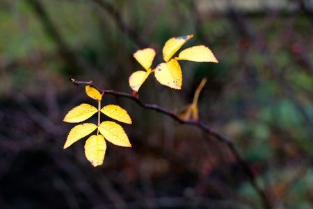 yellow leaf on branch in autumn