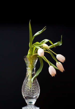 white tulip in water glass on black background Standard-Bild