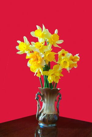 bouquet yellow narcissus on red background