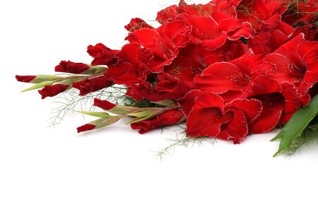 Red gladiolus on a white background. photo