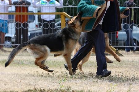 kampfhund: Ausbildung von Hunden offiziellen Editorial