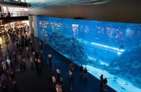두바이, 아랍 에미리트 - 3월 21일 : 2011 년 3 월 21 일에 두바이 두바이 몰 쇼핑 센터에있는 수족관의보기 세계에서 가장 큰 실내 수족관.. 3 층 집에서 50