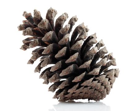 pinecone: pinecone isolated on white background Stock Photo