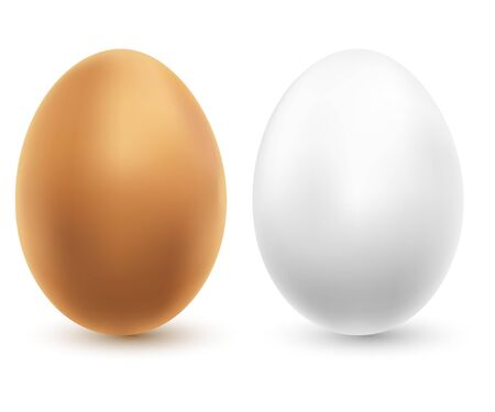 ailment: Illustration of two chicken eggs on a white background. Vector.