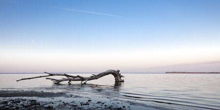 driftwood: dry tree in the river Stock Photo