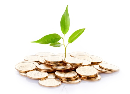 gold tree: Young sprout from a pile of coins  Concept for investments  Stock Photo
