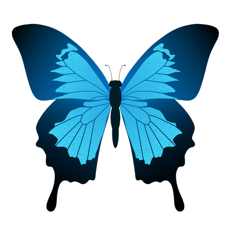 butterfly isolated: Illustration Blue butterfly isolated on white background. Papilio Ulysses. Vector.