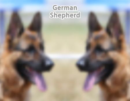 German Shepherd portrait. Vector Illustration.