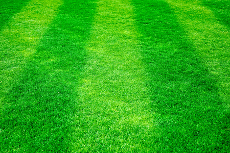 terrain de football: l'herbe verte sur le terrain de football. Nature background