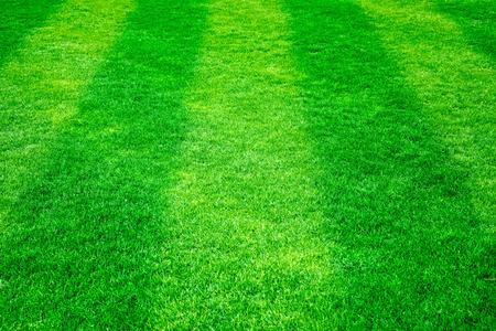 terrain de foot: l'herbe verte sur le terrain de football. Nature background