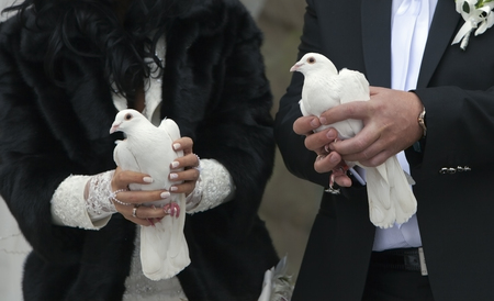 releasing: Two white Pigeons in the hands of the Newlyweds