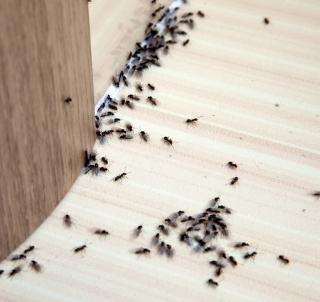 ベースボードと壁の角の家のアリ