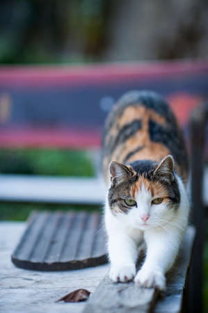 cat stretching: A cat stretching herself on the garden table