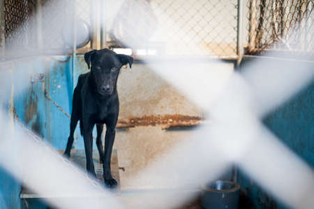 insecure: An insecure dog in the shelter
