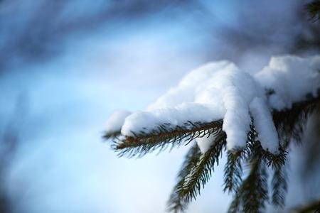 Kerstmis groenblijvende spar boom met verse sneeuw