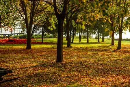 Beautiful autumn landscape with yellow trees and sun. Colorful foliage in the park. Falling leaves natural background. Autumn Landscape