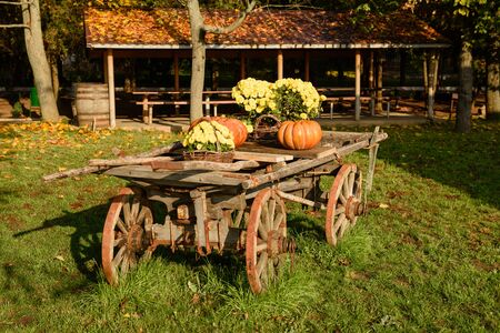 Wooden cart with autumn fruits. Autumn harvest festival - old cart with pumpkins. Landscape design in the country style for fall season