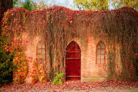 The wall of the old house grown with a beautiful red plant. Abandoned park in autumn Stockfoto