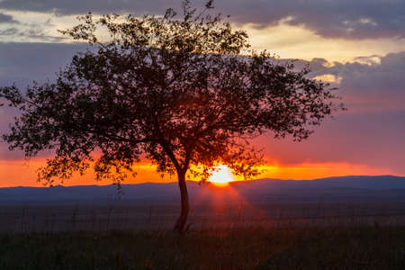 Einsamer Baum bei Sonnenaufgang auf einer Wiese Standard-Bild - 50875740