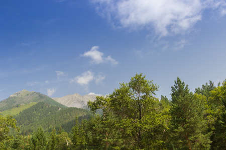 Blue sky and mountains covered with forest.