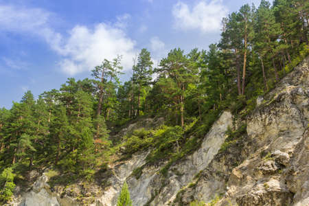 Trees on a rocky slope and blue sky.