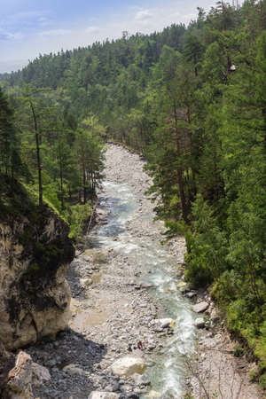 Mountain river among the green forest.
