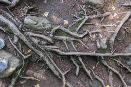 The gray roots of the trees in the background of the earth.