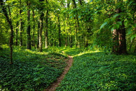 forest, path, green, nature, road, tree, summer, sun, landscape, wood, beautiful, way, environment, natural, panorama, sunny, woods, outdoor, nobody, sunlight, beech, through, background, trees, light, sunbeams, scene, foliage, deciduous, bright, lush, panoramic, spring, footpath, scenery, plant, season Фото со стока