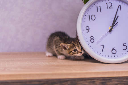 striped kitten hid behind a clock on a wooden table