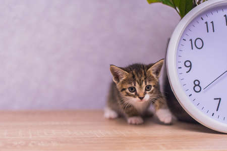 striped kitten sits near a clock on a wooden table
