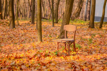 old wooden chair stands on the yellow fallen foliage among the trees in the autumn park