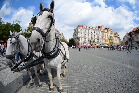 PRAGUE, CZECH REPUBLIC - JULY 17, 2017: Horse harness to the Old Town Square Prague, Czech Republic